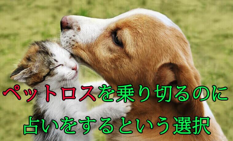 ペット占いとは