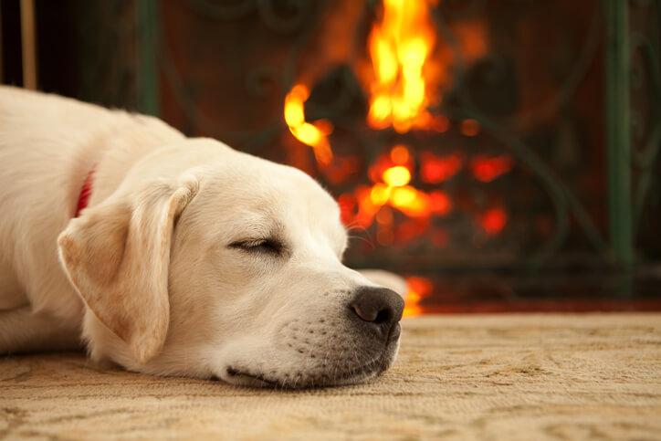 夢占い 火事 犬