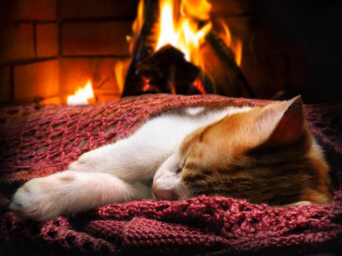 夢占い 火事 猫