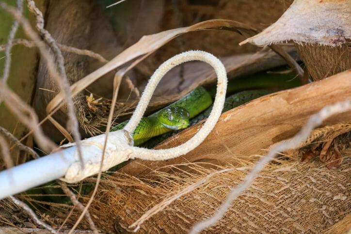 夢占い 蛇 捕まえる