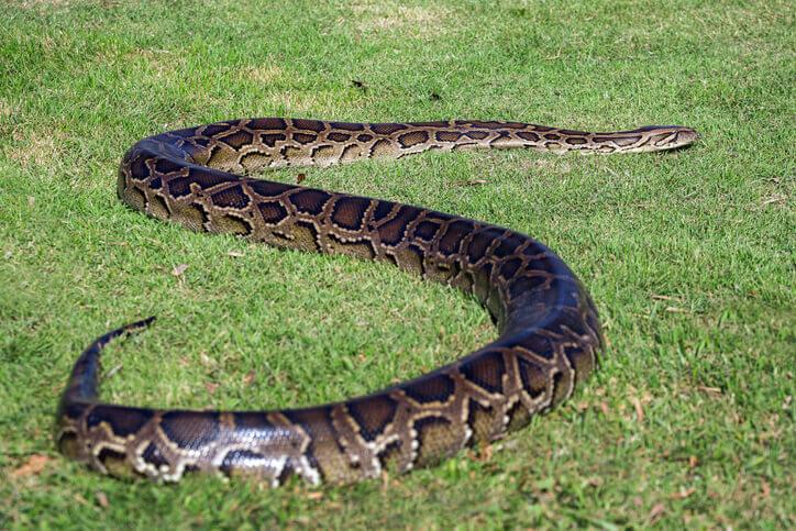 夢占い 蛇 茶色