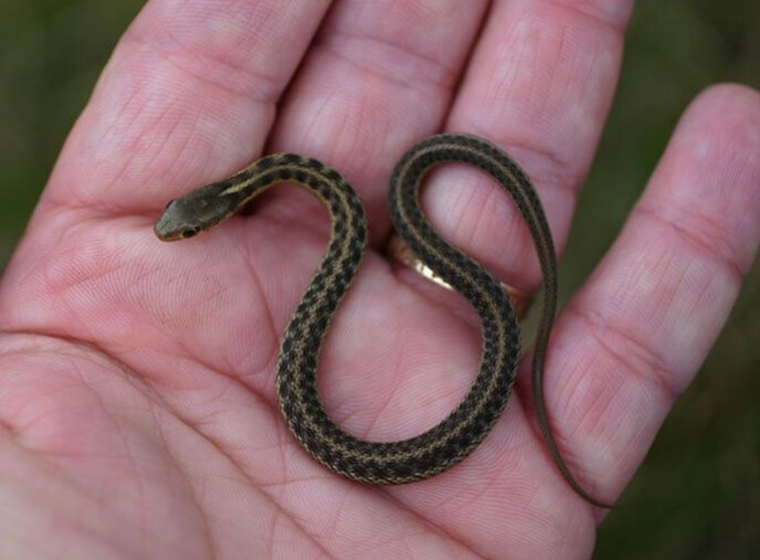 夢占い 蛇 小さい