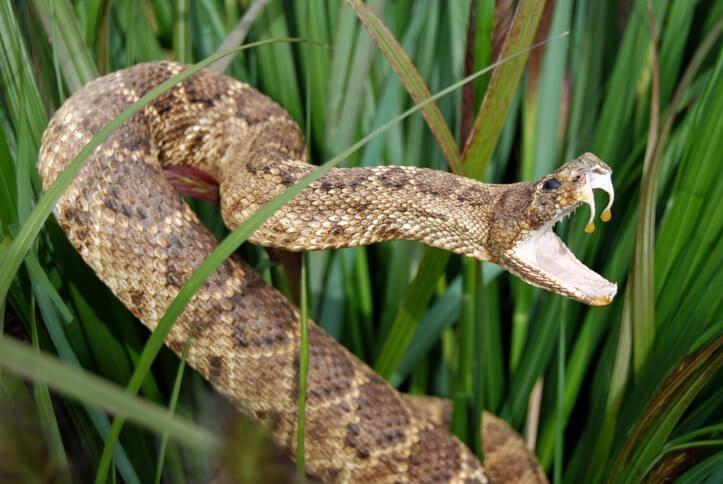 夢占い 蛇 毒蛇 毒