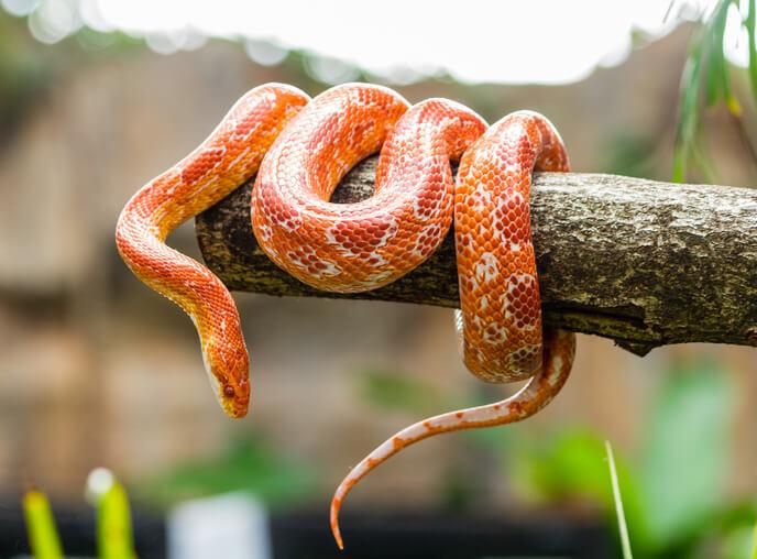夢占い 蛇 オレンジ色