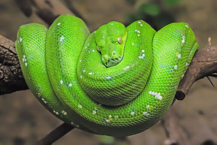 夢占い 蛇 緑色