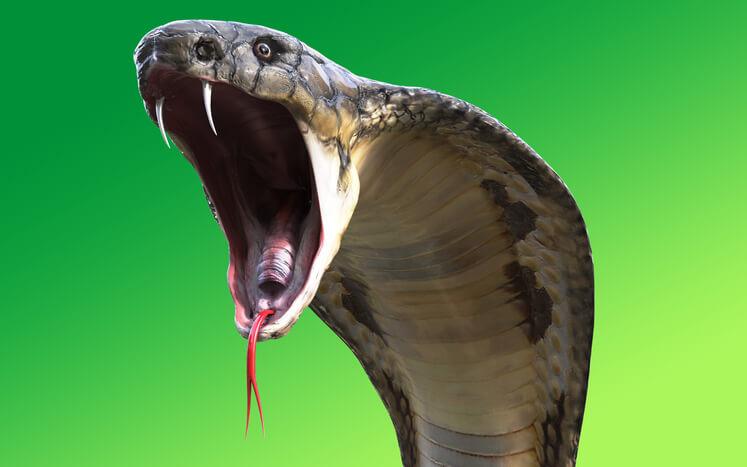 夢占い 蛇 威嚇