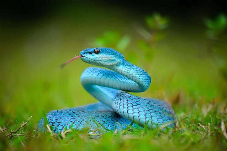夢占い 蛇 青色