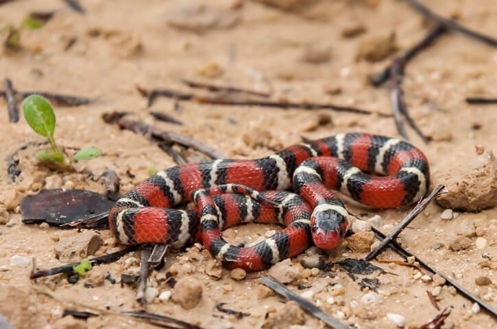 夢占い 蛇 赤色