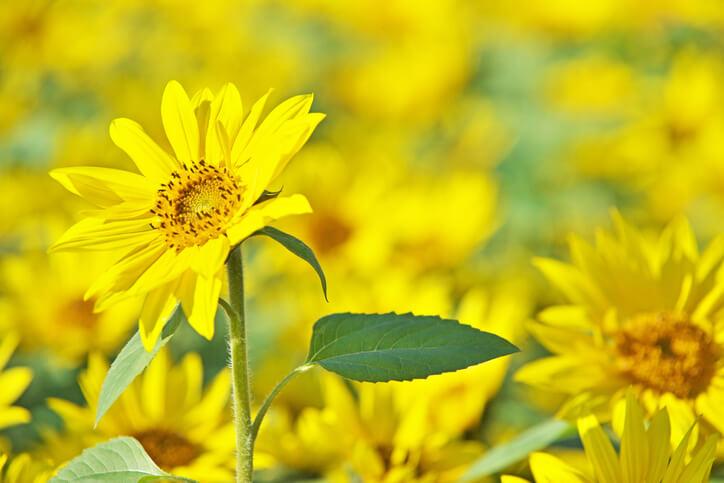 オーラ占い 黄色