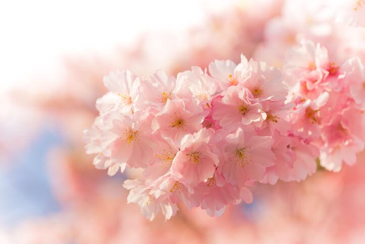 オーラ占い ピンク色