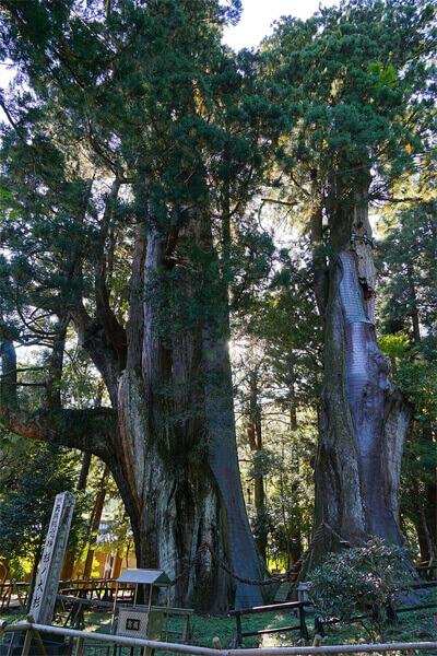 杉の大杉 パワースポット 高知県