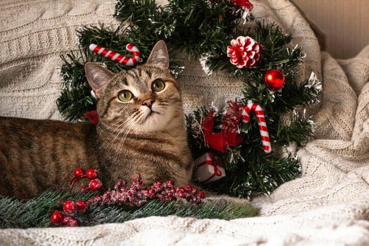 Xmas クリスマス 占い 娯楽 エンタメ 占い師 当たる