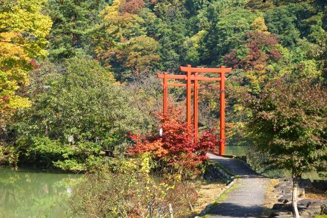 鯉恋の宮 富山 パワースポット オススメ 占い ランキング