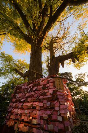 むすびの樹 縁結び ピンク絵馬 パワースポット