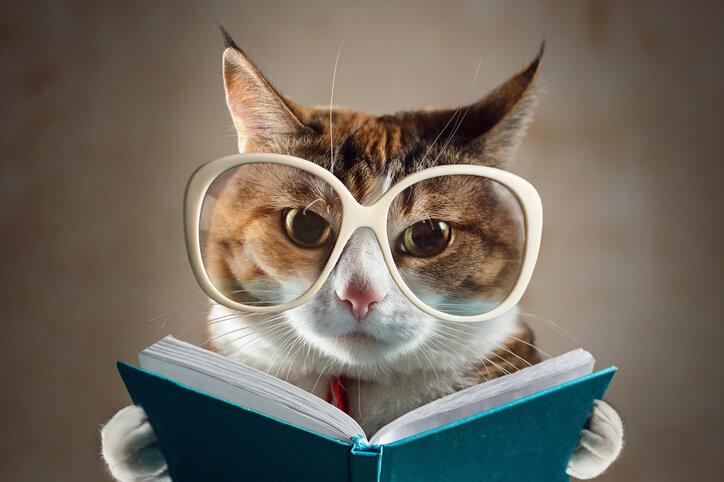 賢い 猫 占い おすすめ 当たる 口コミ